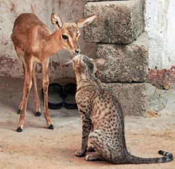 1024x1188px Cat And Bambi Cat Picture Picture in Funny Cat Pictures