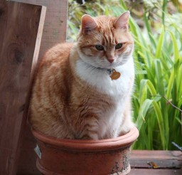 1024x1537px Cat Plant Cat Picture Picture in Funny Cat Pictures