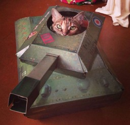 1024x1024px Cat Tank Cat Picture Picture in Funny Cat Pictures