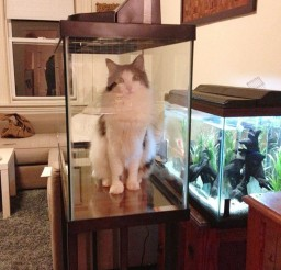1024x1365px Catfish Cat Picture Picture in Funny Cat Pictures