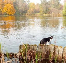 1024x798px Duck Hunting Cat Picture Picture in Funny Cat Pictures