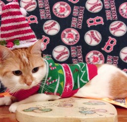 1024x768px Feeling Festive Cat Picture Picture in Funny Cat Pictures