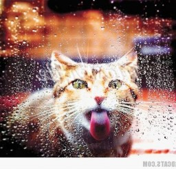1024x825px Funny Cat Cat Picture Picture in Funny Cat Pictures