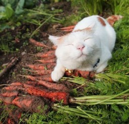 1024x1536px Harvest Cat Picture Picture in Funny Cat Pictures