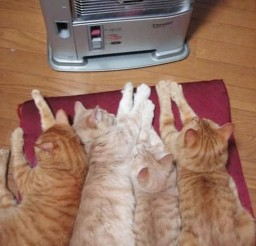 1024x1427px Its So Cold Today Cat Picture Picture in Funny Cat Pictures