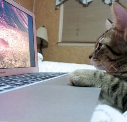 1024x768px Kitten Watching Bird Videos Cat Picture Picture in Funny Cat Pictures
