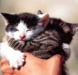 1024x768px Kittens Hug Cat Picture Picture in Funny Cat Pictures