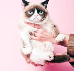 1024x1249px Lovely Grumpy Cat Cat Picture Picture in Funny Cat Pictures