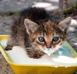 1024x768px Milk Bath Cat Picture Picture in Funny Cat Pictures