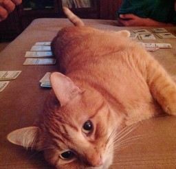 1024x1370px Oh Pardon Mewere You Playing A Game Cat Picture Picture in Funny Cat Pictures