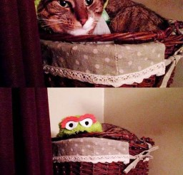 1024x1537px Oscar The Grouch Costume Cat Picture Picture in Funny Cat Pictures