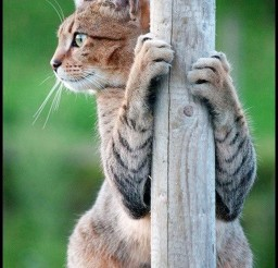 1024x1532px Pole Dancing Cat Picture Picture in Funny Cat Pictures