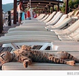 1024x741px Sleeping Under The Sun Cat Picture Picture in Funny Cat Pictures