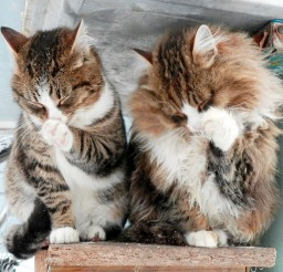1024x900px Synchronized Washing Cat Picture Picture in Funny Cat Pictures