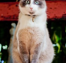 1024x1514px Those Eyes Cat Picture Picture in Funny Cat Pictures