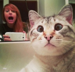 1024x1024px Utter Surprise Cat Picture Picture in Funny Cat Pictures