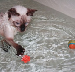 1024x683px Waterfowl Cat Cat Picture Picture in Funny Cat Pictures