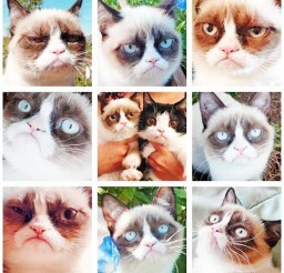 1024x1044px A Lot Of Emotions Cat Picture Picture in Funny Cat Pictures