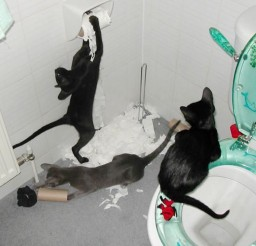 1024x768px Bathroom Party Cat Picture Picture in Funny Cat Pictures