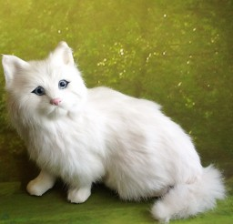 1372x1372px Persian Cat Gifts Picture in Persian Cat