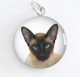 570x570px Siamese Cat Charm Picture in Siamese Cats
