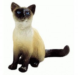 500x500px Siamese Cat Toys Picture in Siamese Cats