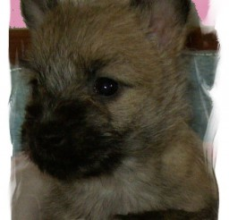 438x610px PET STORES IN ATLANTA THAT SELL PUPPIES Picture in Breed Puppies
