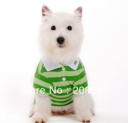 1000x1000px TEACUP PUPPY CLOTHES CHEAP Picture in Breed Puppies