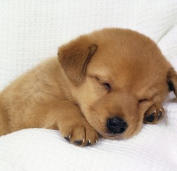 1600x1200px Wonderful Baby Puppies Picture Gallery Picture in Puppies
