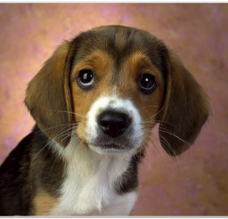 816x616px Cute Hound Dog Puppies Picture Collection Picture in Puppies