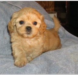 816x681px Cute Puppies For Sale Picture Collection Picture in Puppies