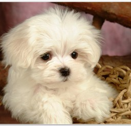 816x516px Lovely Funny Cute Puppies Images Picture in Puppies