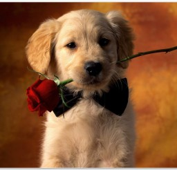 816x616px Lovely Puppy Photo Collection Picture in Small Puppies