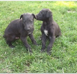 816x616px Puppies For Sale Picture Collection Picture in Puppies