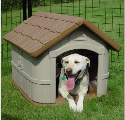 816x816px Wonderful Plastic Dp Hunter Insulated Dog House Photo Inspirations Picture in Dog